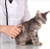 Ветеринарные клиники в Тереньге